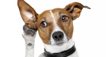 Il cane l'animale che più comprende l'essere umano