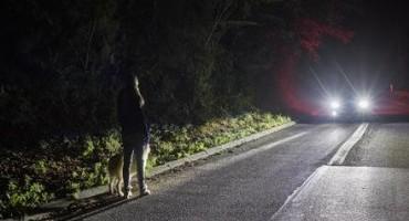 FORD sviluppa una nuova tecnologia per rendere più sicura la guida notturna